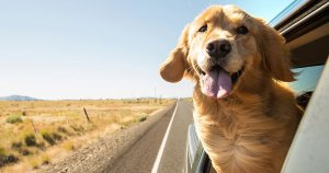 5 Ways Hemp Oil Can Improve Your Dog's Health